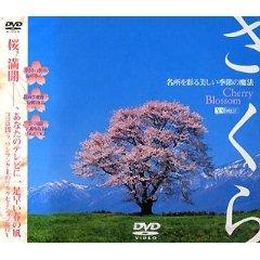 桜の名所.jpg